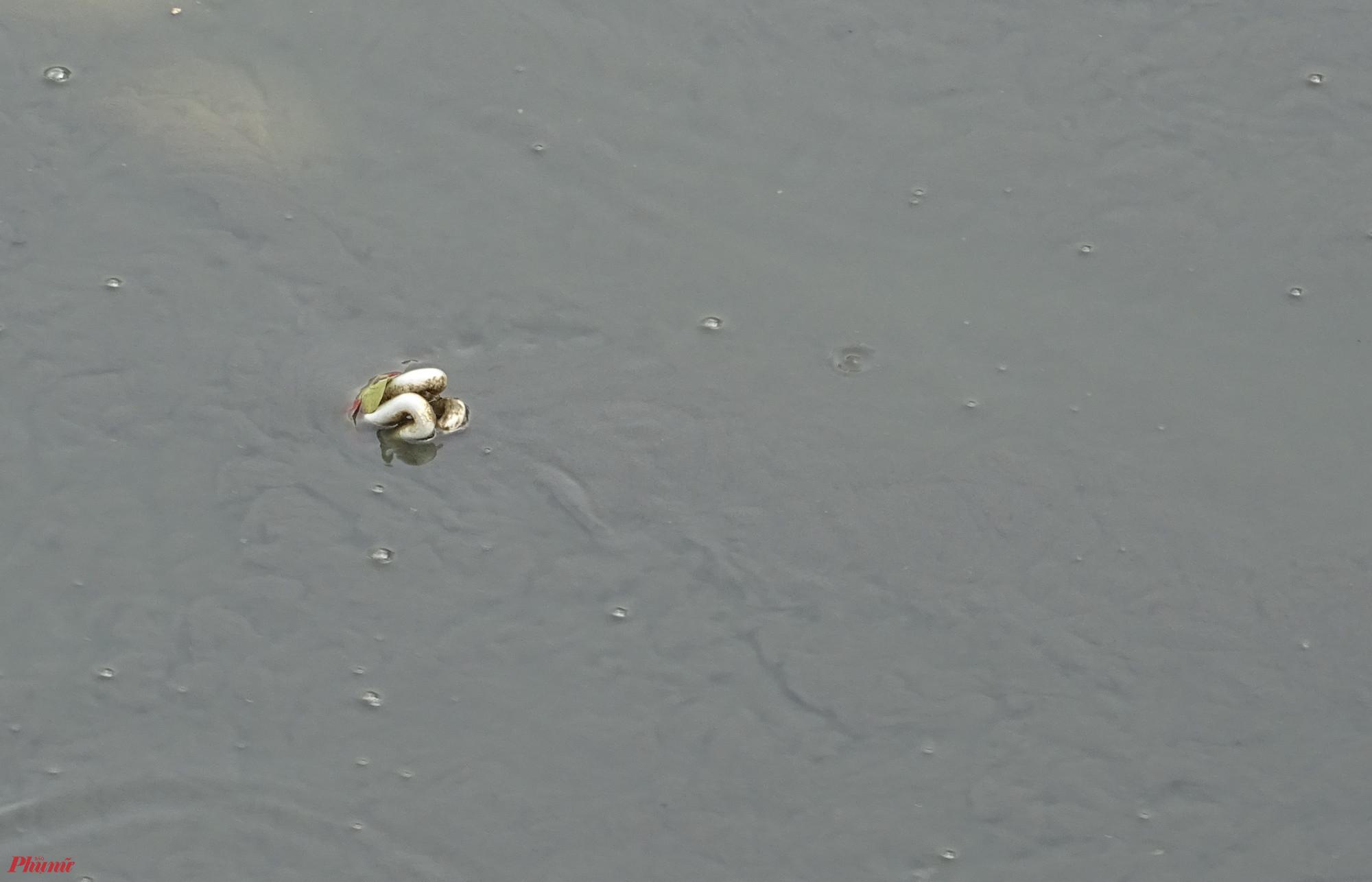 -Những chỗ kênh cạn đáy, lộ ra nhiều loại rác thải nguy hiểm. Đến bóng đèn led cũng bị vứt xuống kênh. Ảnh: TRUNG THANH