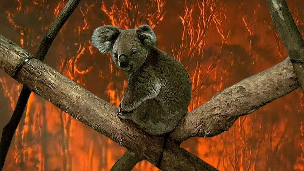 Vụ cháy rừng trên khắp nước Úc cho đến nay đã cướp đi 26 mạng sống, phá huỷ hàng ngàn ngôi nhà và thiêu rụi số lượng lớn động vật sống trong rừng.