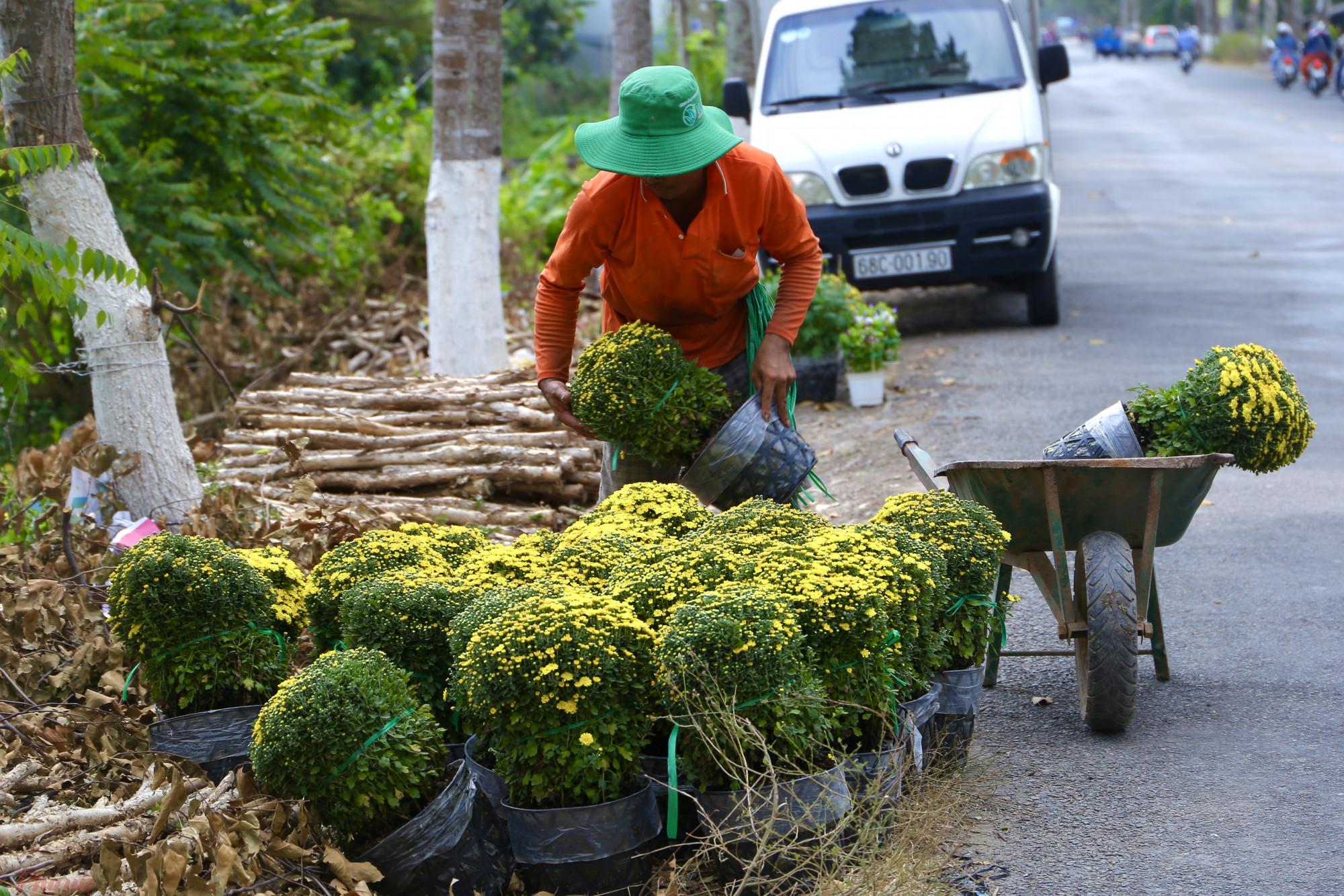 Hoa được tập kết ra trước nhà để các thương lái dễ dàng vận chuyển.