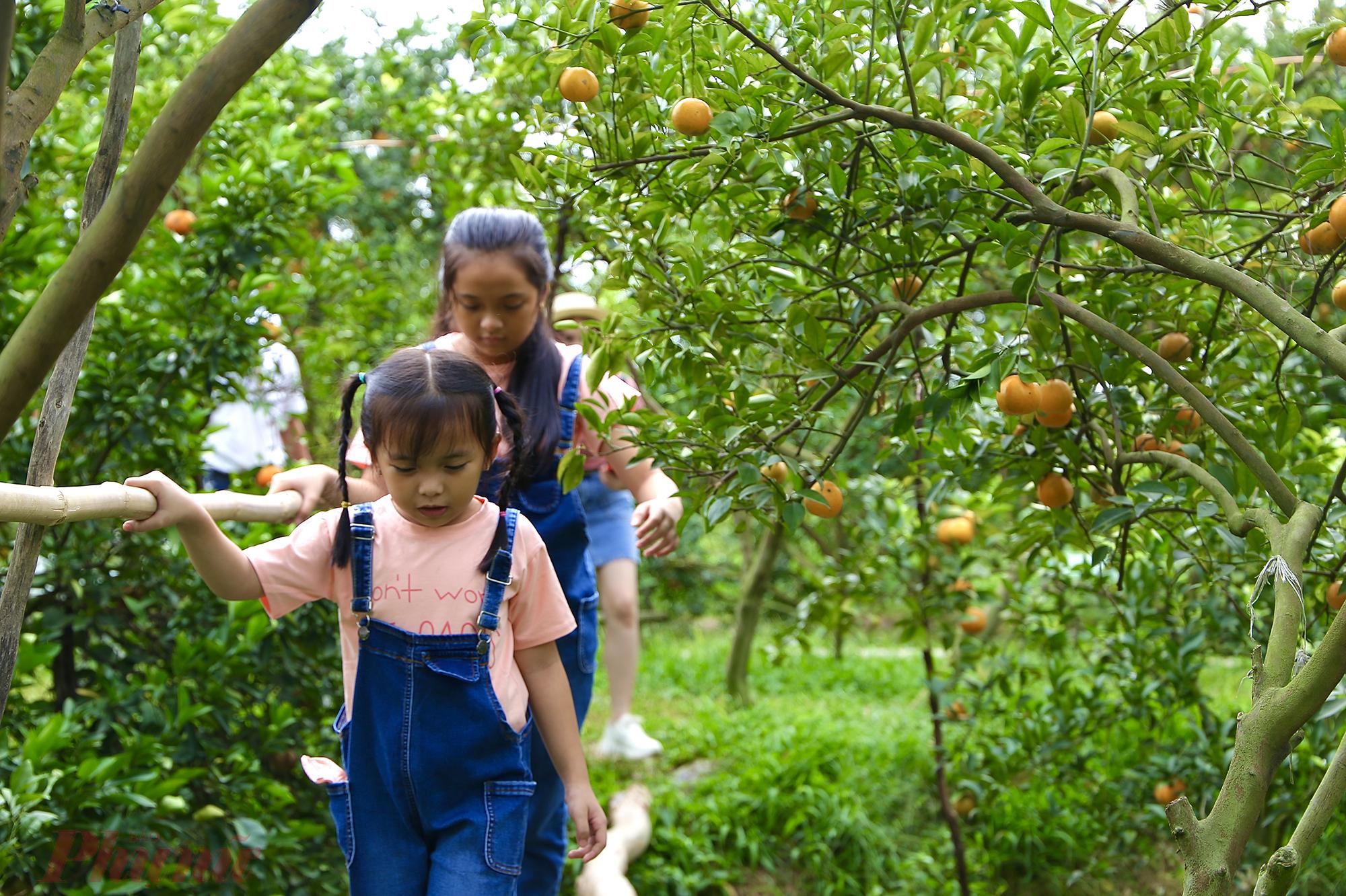 Từ trung tâm chợ Lai Vung, du khách rẽ trái vào tỉnh lộ 581 khoảng 4 km sẽ đến nơi tập trung những nhà vườn mở cửa du lịch. Các nhà vườn tập trung hai bên con sông nhỏ như: Hai Kiệt, Út Nhỏ, Lan Anh...