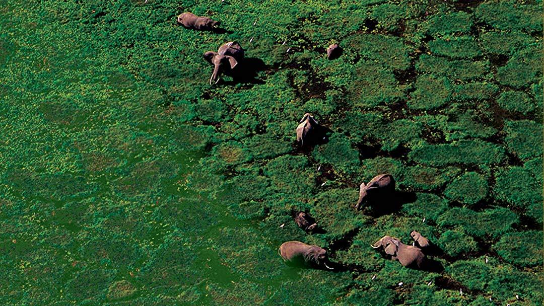 Con người góp phần thúc đẩy tốc độ tuyệt chủng của các loài sinh vật lên khoảng 500 lần.