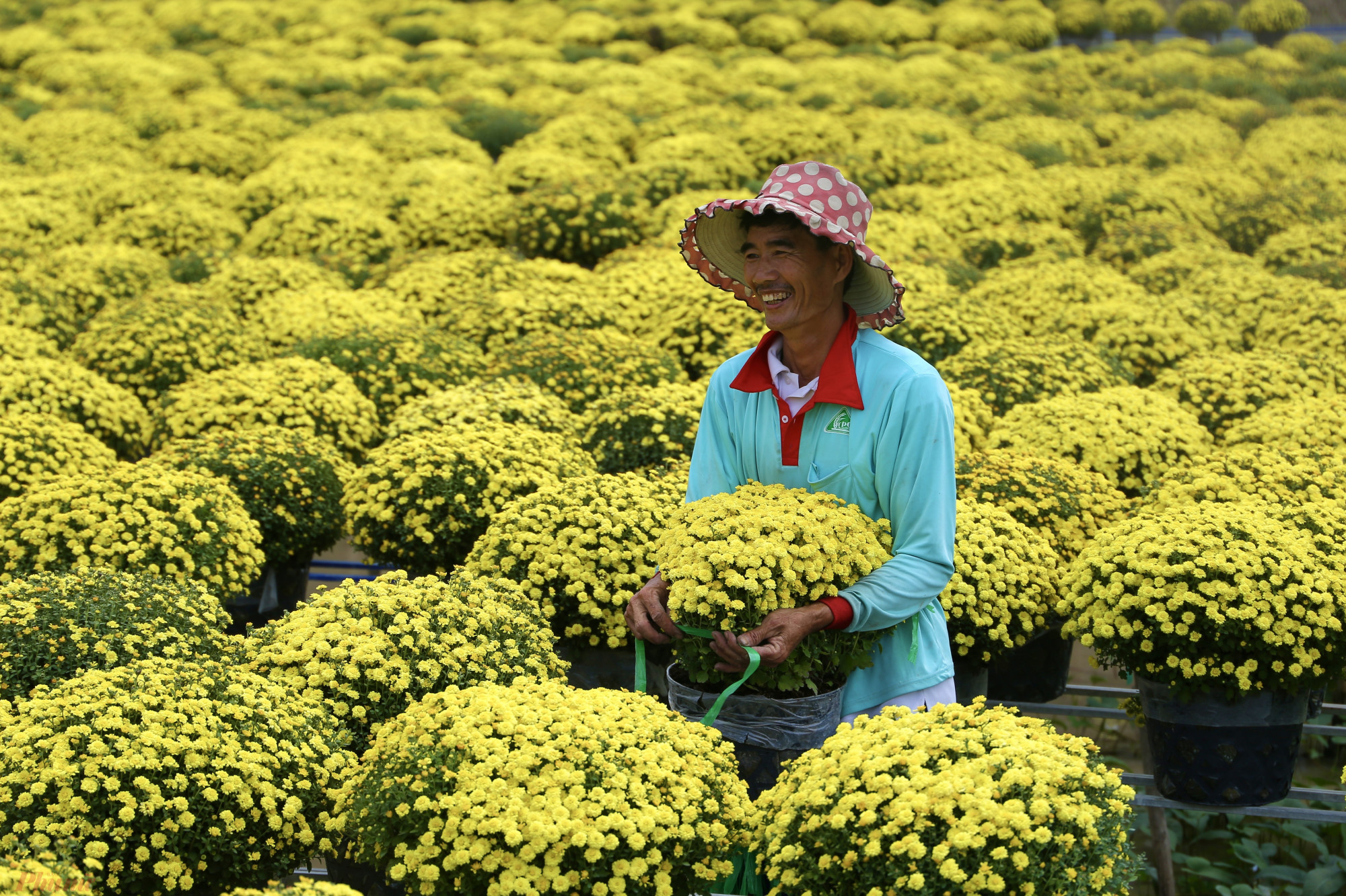 Ngoài khu vực làng hoa được quy hoạch để du lịch, du khách có thể men theo tỉnh lộ 581, hướng Sa Đéc đi Cao Lãnh để chụp ảnh cùng những ruộng cúc mâm xôi khổng lồ, có màu vàng rực bắt mắt.