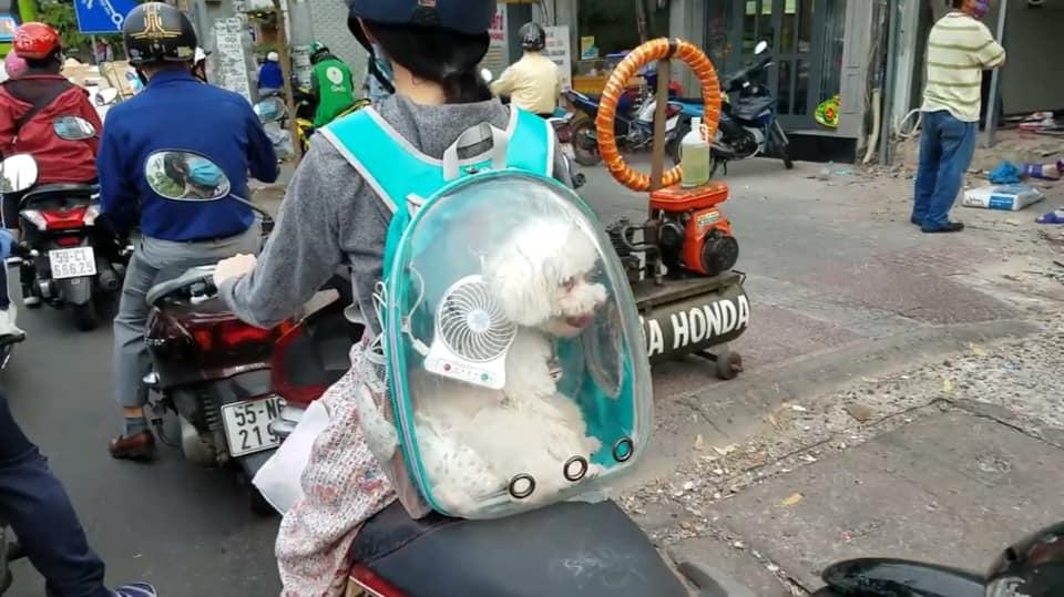 Cún cưng cũng về quê ăn tết