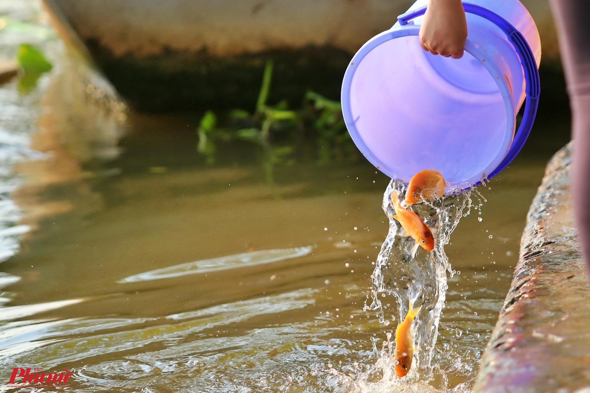 Theo phong tục thả cá chép, cá nên được đặt trong lòng bàn tay, thả nhẹ nhàng xuống nước. Thao tác nhẹ nhàng nhưng nhanh gọn và tránh việc đổ, ném, quăng cá mạnh tay từ xô, chậu, túi nylon xuống thẳng sông hồ.