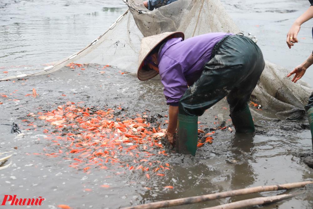 Năm nay, làng cá chép Thủy Trầm tiếp tục áp dụng các phương pháp nuôi cải tiến, đưa một số loại thức ăn vào thử nghiệm nên đem lại hiệu quả cao. Tuy thời tiết có phần phức tạp hơn nhưng sản lượng cá tăng hơn so với năm trước.