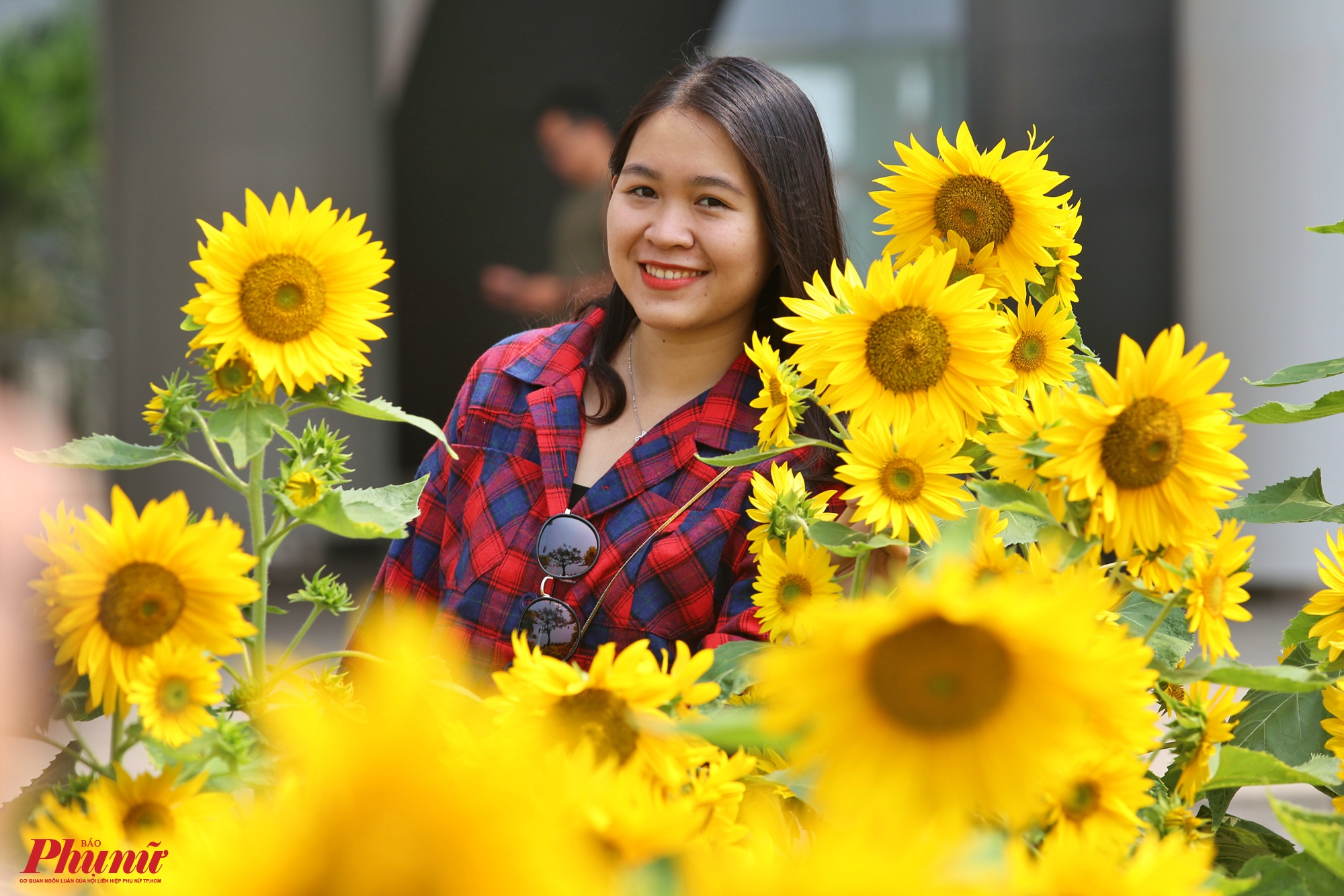 Nhiều bạn trẻ thích thú tạo dáng trước rừng hoa hướng dương toả sắc bên bờ hồ Bán Nguyệt - Phú Mỹ Hưng, quận 7