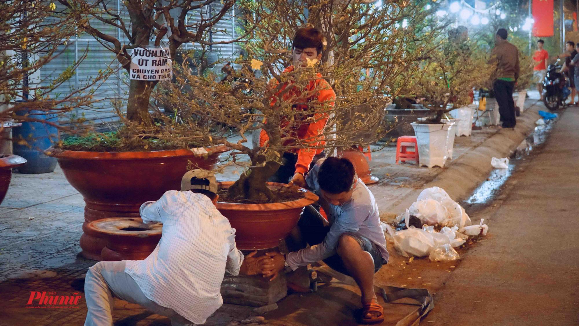 Các chủ vựa bố trsi lại cây kiểng sao khi khách xem cây