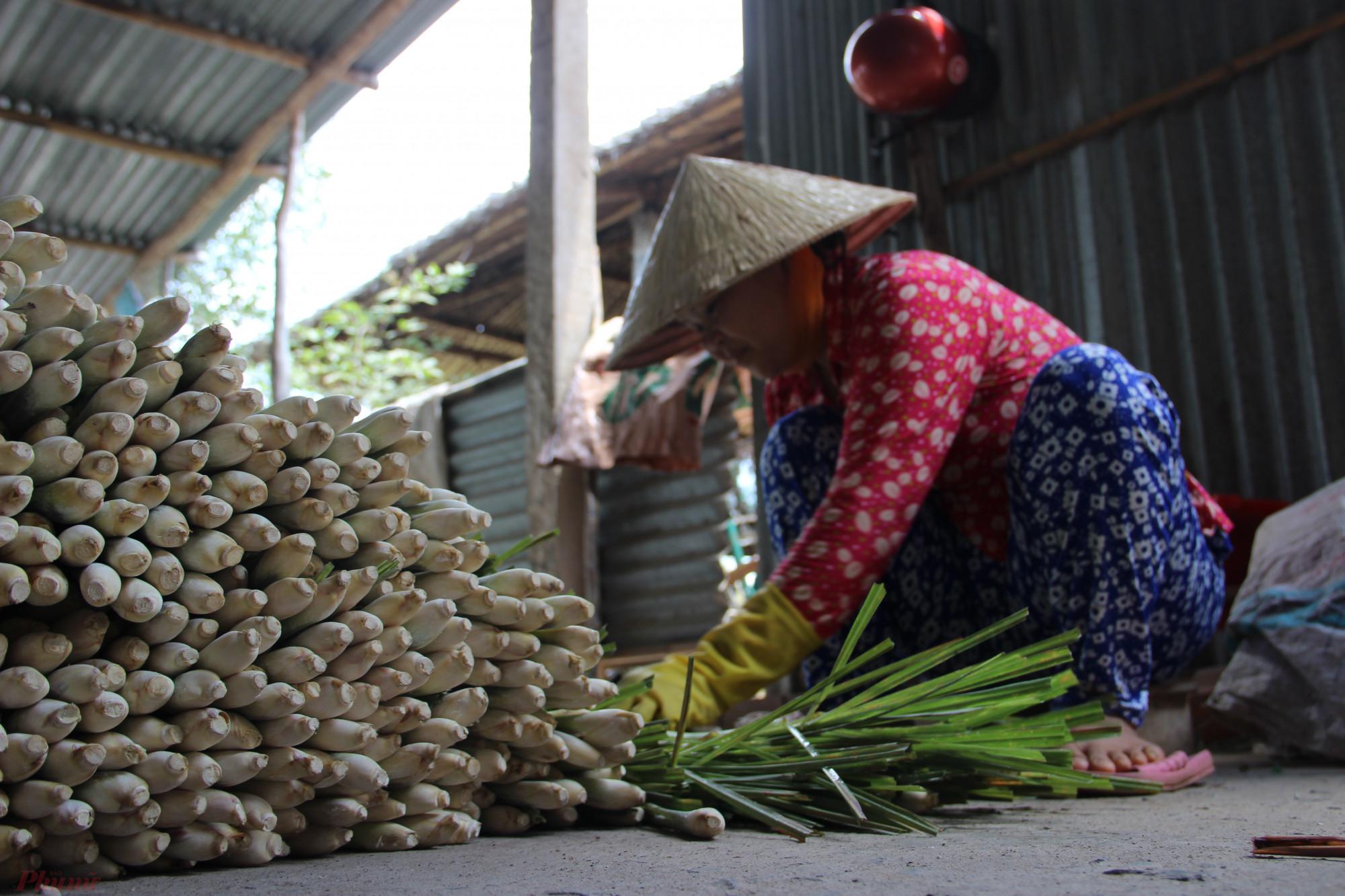 Nông dân tất bật thu hoạch hoa màu để bán trong dịp Tết.
