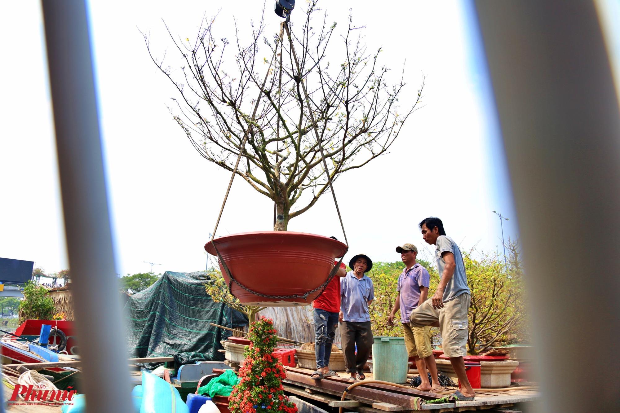 Niềm vui ngày Tết khi mua được những cây hoa ưng ý. Người Sài Gòn nói riêng và người Việt Nam nói chung hay có sở thích đi dạo chợ hoa trong những ngày cận Tết, sắm cho mình những chậu kiểng đẹp để về bày trong nhà.