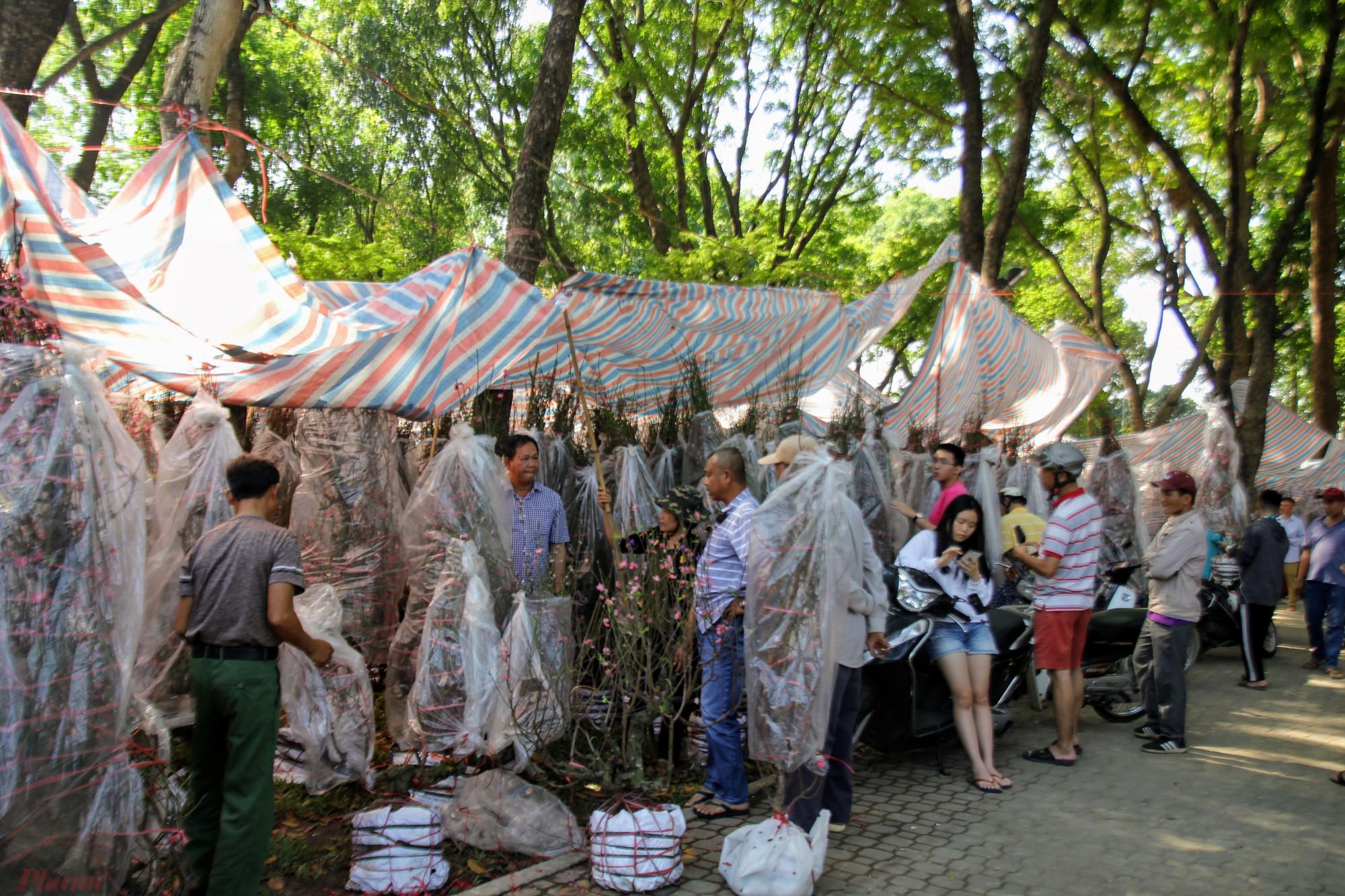 Chợ đào Bắc tại công viên Gia Định (quận Gò Vấp) hàng năm đều nhộn nhịp từ 19, 20 tháng Chạp.
