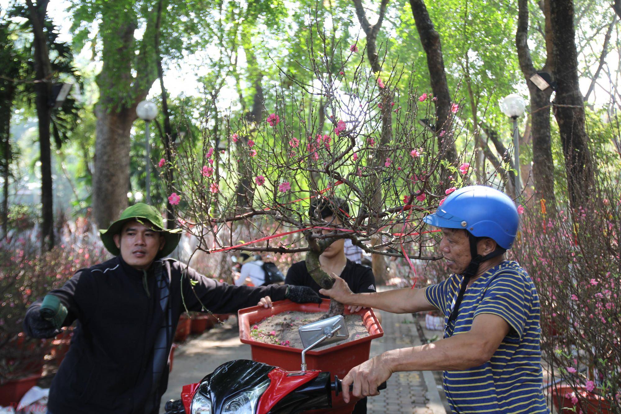 Người mua đào Tết tại công viên Gia Định theo quan sát của pv chọn đào rất kỹ, kiểm tra từ gốc, so sánh giá ở nhiều điểm bán để quyết định chọn mua.