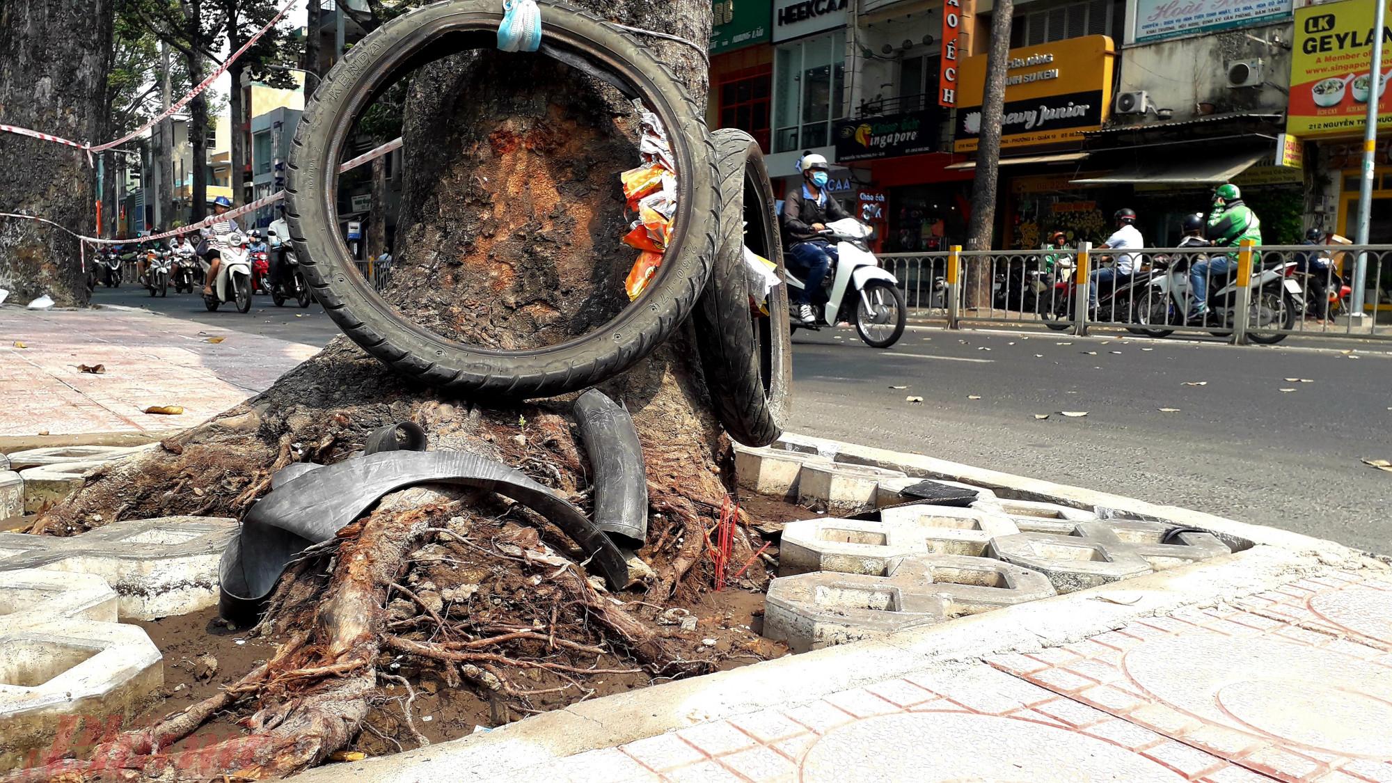 Cây dầu cổ thụ trên đường Nguyễn Tri Phương ( quận 10, TPHCM) cũng bị đứt rễ do công trình lát gạch vỉa hè vào dịp gần tết.