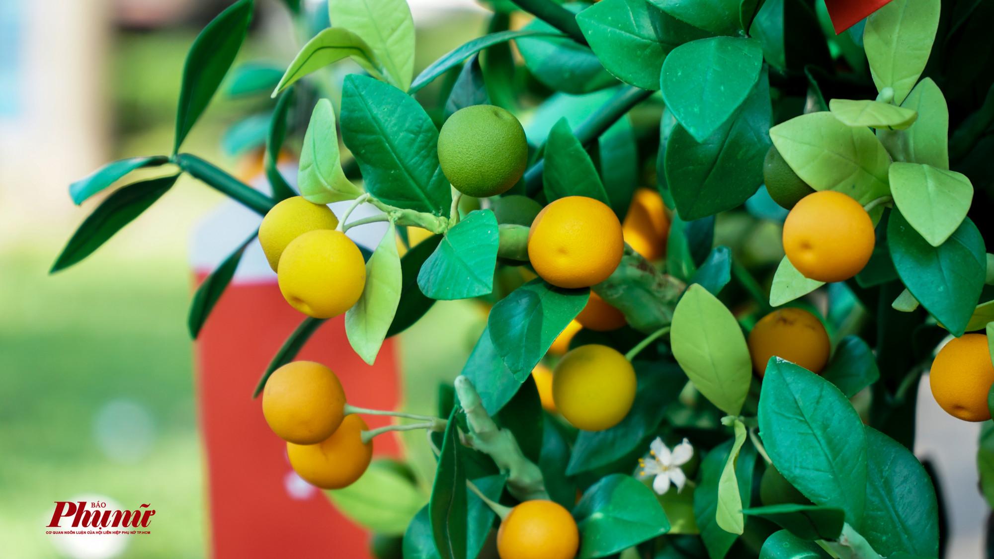 Những trái hạnh sau khi được gắng lên cây