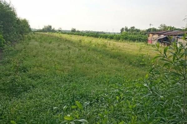TP.HCM xin chuyển đổi khu đất 384,2 ha tại huyện Hóc Môn sang đất khu đô thị
