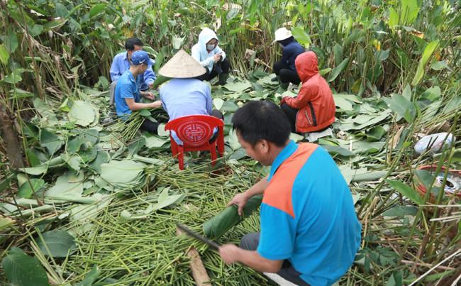 <p>Những ngày này, người dân thôn Vĩnh Phúc, xã Quang Vĩnh, huyện Đức Thọ,&nbsp;tỉnh Hà Tĩnh đang vào cao điểm thu hoạch lá dong để đáp ứng như cầu cho vụ bánh tết sắp tới.&nbsp;</p>