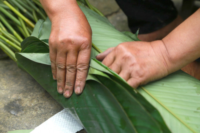 <p>Thu hoạch khẩn trương, song việc buộc lá dong vẫn được người dân cẩn trọng để tránh làm rách, hư lá.</p>