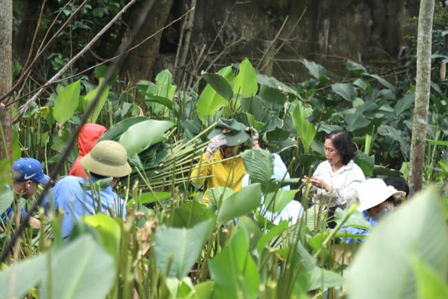<p>Thương lái đặt hàng sớm khiến người dân ở vùng trồng lá dong lớn nhất Hà Tĩnh phải tất bật thu hoạch, cắt tỉa để kịp giao hàng.</p>