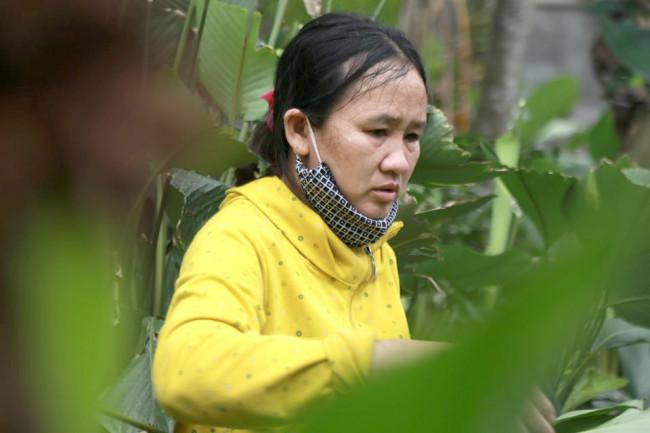 <p>Theo người dân địa phương, nghề trồng dong hình thành ở thôn Vĩnh Phúc đã từ lâu năm. Hiện toàn thôn có 125 hộ trồng, hộ trồng ít nhất là 300 m<sup>2</sup>, hộ nhiều nhất là hơn 1.000 m<sup>2</sup>.</p>