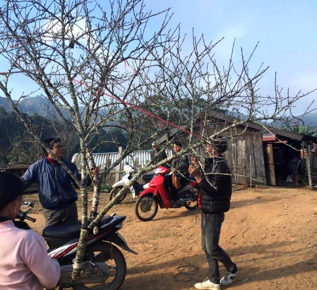 <p>Anh Trần Văn Phương (trú tại huyện Nghi Lộc, tỉnh Nghệ An) cho hay, người chơi ngày càng thích cái mộc mạc, hoang dại của đào rừng.&nbsp;Tuy nhiên, đào rừng ngày càng khan hiếm, đặc biệt là những cành đào cổ, lâu năm.</p>