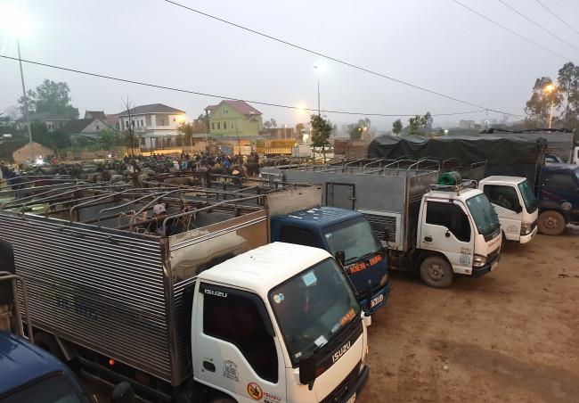 <p>Chợ Ú thuộc xã Đại Sơn, huyện Đô Lương, tỉnh Nghệ An là chợ đầu mối trâu bò lớn nhất miền Trung, họp 6 phiên (vào ngày 1, 6, 11,16, 21, 26 âm lịch) mỗi tháng.</p>