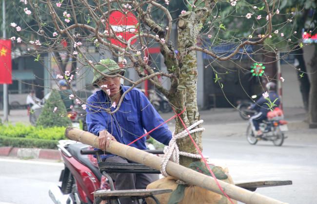 """<p style=""""text-align: justify;"""">Sáng 28 Tết, ông Trần Văn Minh (60 tuổi, trú tại huyện Nghi Lộc, tỉnh Nghệ An) vội vã bê chậu quất lên chiếc xích lô cũ kỹ chở về nhà cho khách. """"Hôm nay khách đi mua đào, quất nhiều nên tôi phải gắng chạy nhanh chút để kiếm thêm vài cuốc nữa, có tiền mua cho vợ cân thịt rồi nghỉ ăn Tết"""" - ông Minh nói.</p>"""