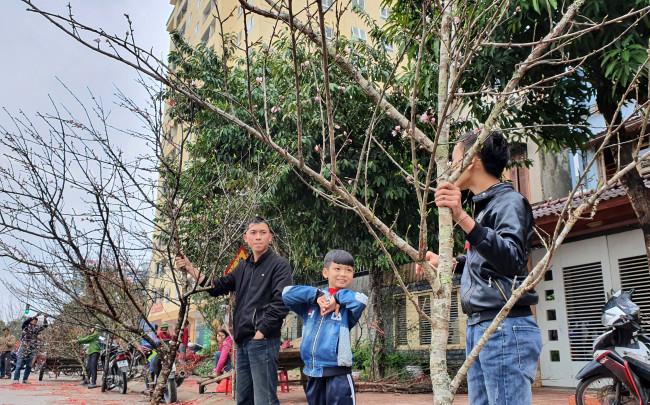 <p>Những ngày này, trên các chợ hoa tết ở thành phố Vinh, nhiều cô cậu nhí cũng tranh thủ những ngày nghỉ học đi bán đào tết phụ giúp bố mẹ.</p>