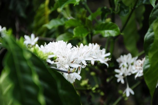 Nhung loai hoa thuong xuyen co mat trong anh cuoi cua phuot thu