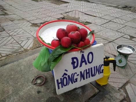 Đào hồng nhung bất ngờ bán tại Sài Gòn, khách tranh mua hàng độc lạ