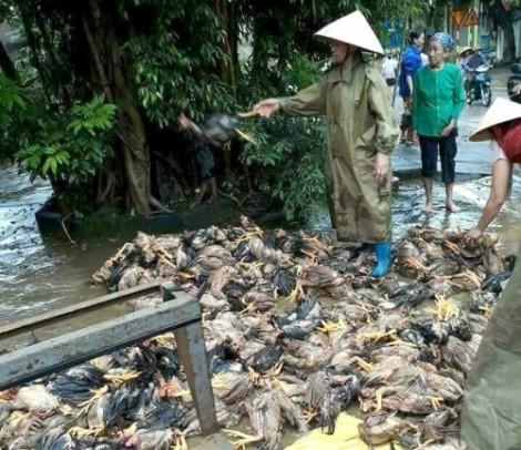 Gần 20.000 hộ dân Thanh Hóa bỏ nhà chạy lũ