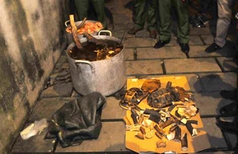 Nổ súng trấn áp nhóm người nấu cao con hổ 230 kg, bơm nước vào 100 con heo