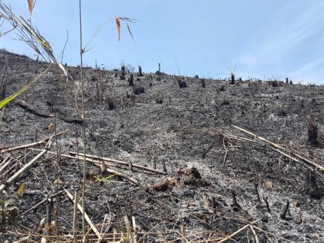 Hơn 100 ha rừng 'biến mất' bí ẩn, cán bộ phụ trách chỉ cần kiểm điểm và rút kinh nghiệm