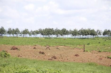 Kỷ luật Chủ tịch xã để mất rừng, sai phạm trong việc xét duyệt cạnh tranh trúng thầu