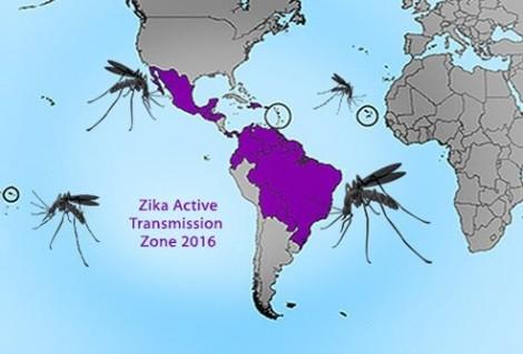 Đã xác định được cơ chế phá hủy hệ thần kinh của vi-rút Zika