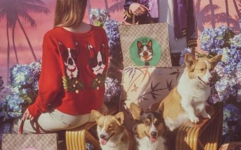 Bộ sưu tập họa tiết chó của Gucci khiến giới mộ điệu 'phát cuồng'
