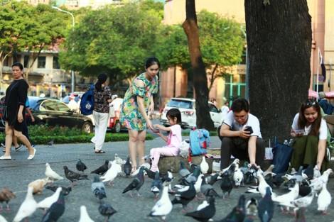Những người bạn của 500 con bồ câu ở trung tâm Sài Gòn