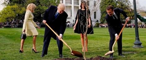 Cây sồi Tổng thống Pháp trồng tặng biến mất bí ẩn khỏi thảm cỏ Nhà Trắng?