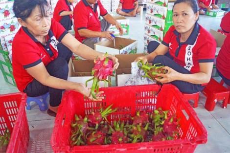 Đến khi nào người Việt được dùng trái cây đạt chuẩn an toàn?