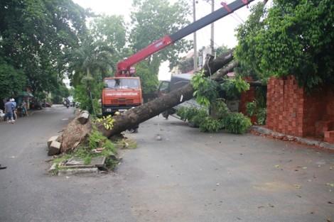 Cây đổ, mái nhà sập, cột điện gãy hàng loạt sau lốc lớn ở Gò Vấp