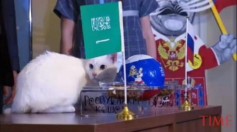 Chú mèo tiên tri dự đoán thế nào về kết quả trận mở màn World Cup?