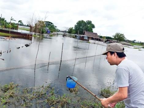 Huyện Hóc Môn, TP.HCM: Hàng chục héc-ta  hoa màu chết chìm  trong biển nước