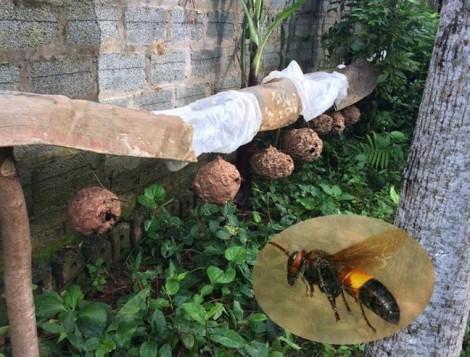 Xử lý tổ ong vò vẽ thế nào cho an toàn?