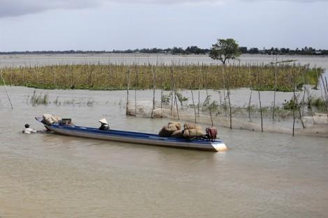 Long An: Đỉnh lũ vượt năm 2017, hơn 5.000 ha lúa nguy cơ bị thiệt hại