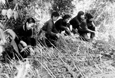 Tiếp bước  truyền thống anh hùng của Trung đội nữ du kích Củ Chi