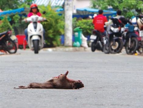 Những 'ổ bệnh' trên đường phố