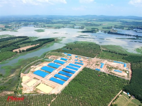 Xây trại heo khổng lồ ngay đầu nguồn cấp nước cho 10 triệu dân