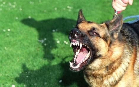 Chó chưa chích ngừa, cắn bé trai 2 tuổi lòi mắt