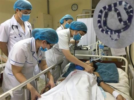 Bé trai bị rắn cạp nia cắn liệt cơ đã cử động được bàn tay sau cứu chữa