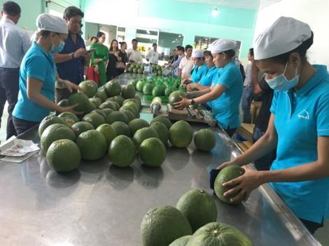 Mở trạm trung chuyển hướng đến xuất khẩu trái cây Bến Tre