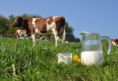 Vì sao sữa tươi Úc là lựa chọn hàng đầu của mẹ Việt?
