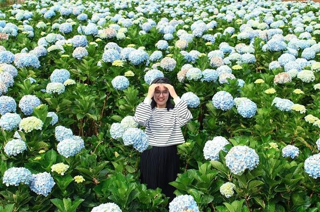 Thang 11, Da Lat mua cua nhung loai hoa